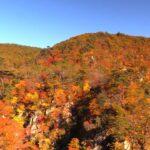 Beautiful Autumn Leaves at Narukokyo Gorge | Osaki, Miyagi Japan